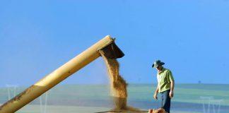 Transporte de soja sul matogrossense pode ir para porto paraguaio. (Foto: Jonas Oliveira/Fotos Públicas)